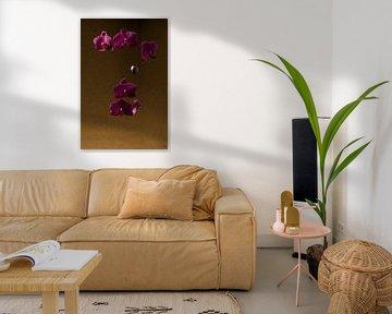 Orchidee schwimmend von Lieke van Grinsven van Aarle