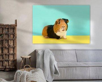 Niedliches Meerschweinchen auf türkisgelbem Hintergrund von Elles Rijsdijk