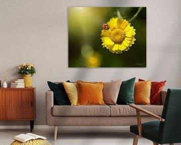 Een lieveheersbeestje op een goudsbloem (Coleostephus myconis) van Flower and Art