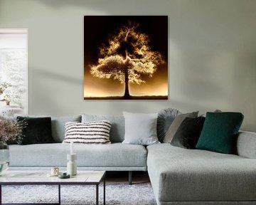Einsamer Baum im Nebel von Maurice Dawson