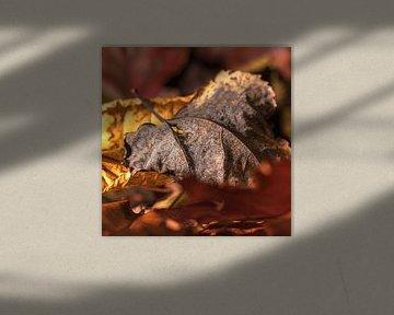 Herfstbladeren van Anouschka Hendriks