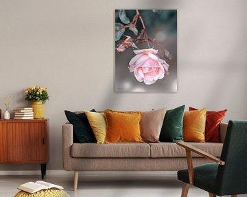 Roos in bloei van Flower and Art