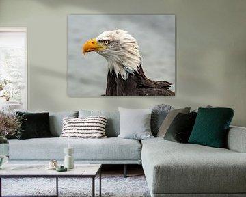 portret Amerikaanse zeearend