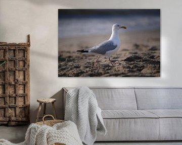 Möwe von Zus en Zo Foto