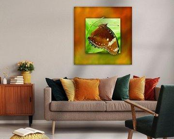 Schmetterling   |   Palmfliegen von Dirk H. Wendt