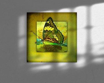 Schmetterling       Butterfly von Dirk H. Wendt