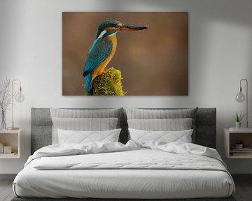 Mevrouw Kingfisher van Daniela Beyer