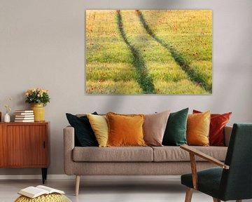 Prélèvement de graines de pavot dans un champ de maïs sur Daniela Beyer