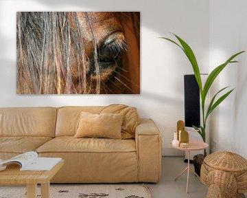 Oog van Arabisch paard van Melissa Peltenburg