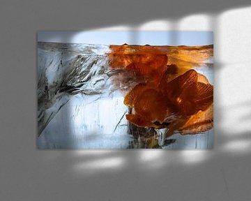 Freesia orange dans la glace 2 sur Marc Heiligenstein