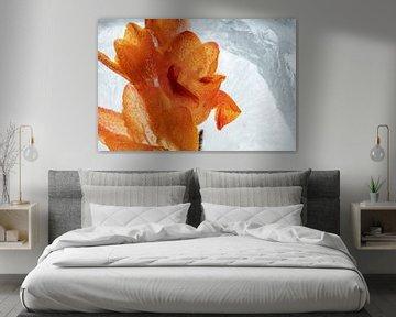 Orange Freesie in Eis 3 von Marc Heiligenstein