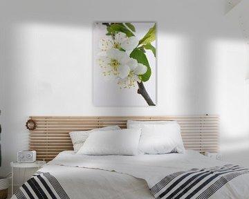 Witte bloesem von Lotte Veldt