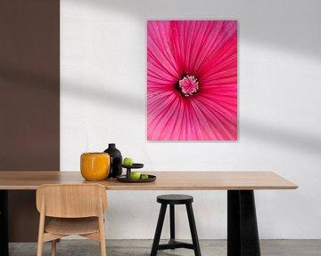 Pink flower von Lotte Veldt