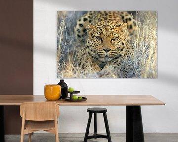 Leopard von Loulou Beavers