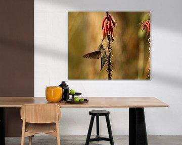 Kolibri in der Mojave Wüste von Christiane Schulze
