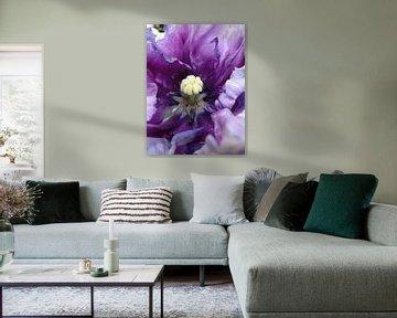 Violetkleurige tulp von Lotte Veldt