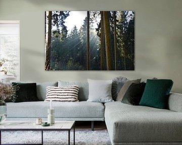 Sonne und Bäume von Susanne Seidel
