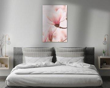 Magnolia van Jan Schuler