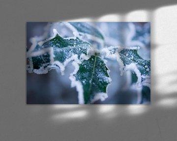 Stechpalme im Schnee von Karijn | Fine art Natuur en Reis Fotografie