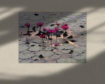 Fuchsia Lotusse Angor Wat sur Lotte Veldt