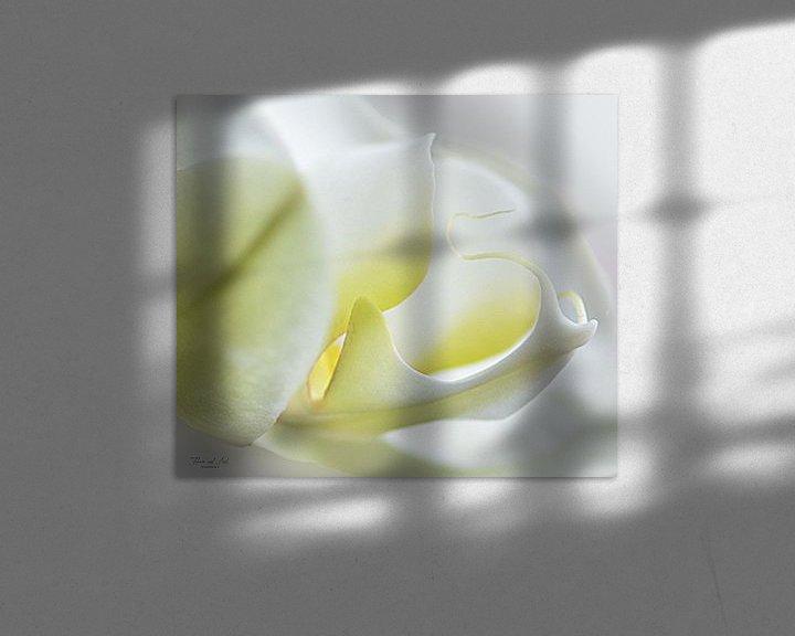 Beispiel: Weiße Orchidee (Phalaenopsis-Orchidee) von Flower and Art