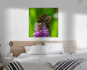 Perlmuttschmetterlinge auf einer gefleckten Orchidee von Abe Maaijen