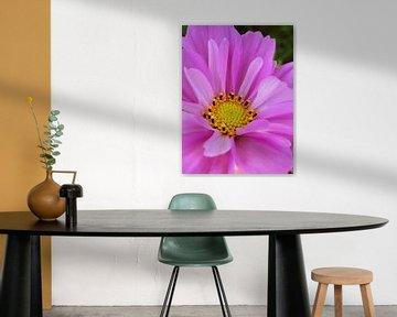 Roze bloem met een geel hartje von Lotte Veldt