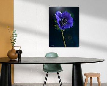 Blaue Anemone (Anemone coronaria) von Flower and Art