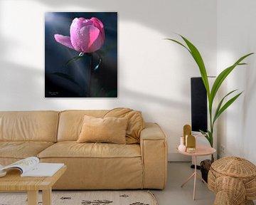 Pfingstrose mit Tautropfen (Paeonia) von Flower and Art