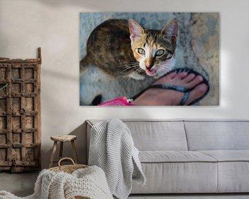 Kätzchen von Marieke Funke