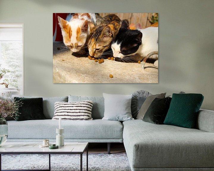 Beispiel: Türkische Straßenkatzen von Marieke Funke