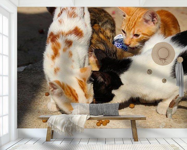 Beispiel fototapete: Türkische Straßenkatzen von Marieke Funke