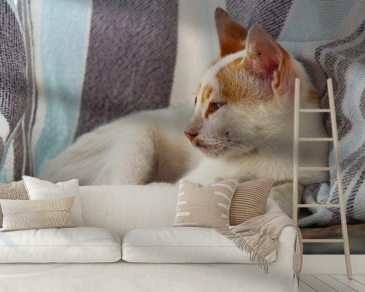 Beispiel fototapete: Türkische Katze von Marieke Funke