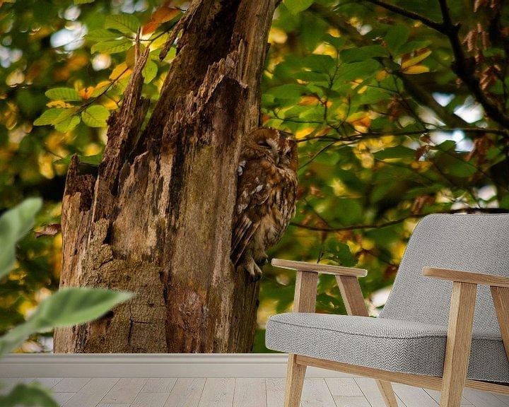 Beispiel fototapete: Waldkauz von Mariëlle Weijsenfeld