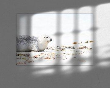 Zeehonden op Düne - 6 van Danny Budts