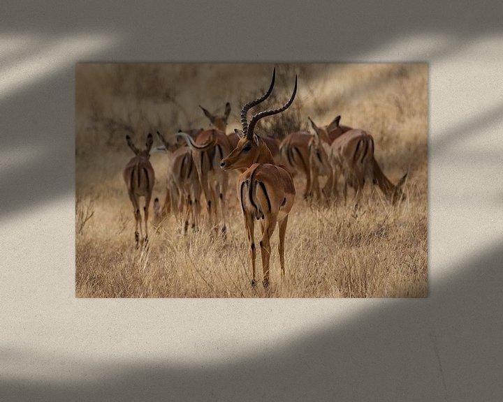 Beispiel: Thomson-Gazelle von Gerwin Hoogsteen