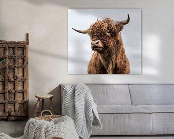 Portret Schotse Hooglander van Ans Bastiaanssen