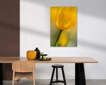 Gele tulp Yellow Tullip von Arjan Bijker