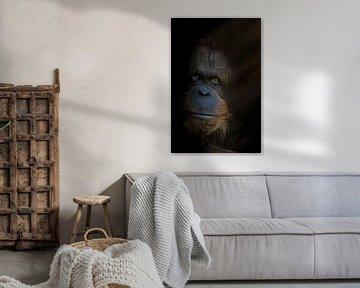 Der König mit Rebrandt-Beleuchtung von Ron Meijer Photo-Art
