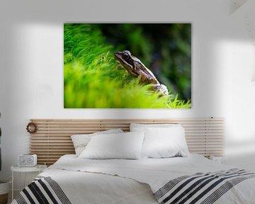 Frosch auf grünem Gras von Gerwin Hoogsteen