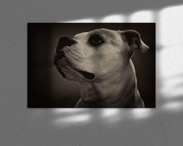 Dog von Peggy Neuteboom
