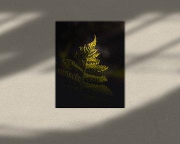 Sunlight fern van Sandra Hazes
