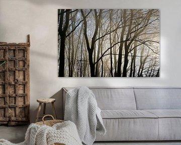Baumstämme und kahle Äste als Silhouetten im dunstigen Morgenlicht eines Buchenwaldes, abstrakter Na