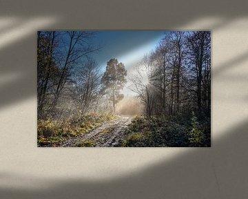 Wunderschöner Waldweg mit verschiedenen Baumarten und Sonnenstrahlen an einem kalten Morgen, Kopierr