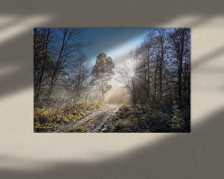 Impression: Magnifique chemin forestier avec différentes sortes d'arbres et de rayons de soleil par un matin fro sur Maren Winter