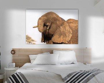 Eléphant sur Petervanderlecq
