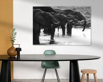 Elefanten von Petervanderlecq