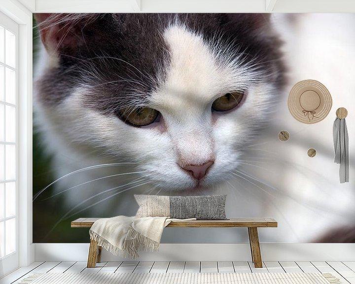Beispiel fototapete: Katze von BVpix