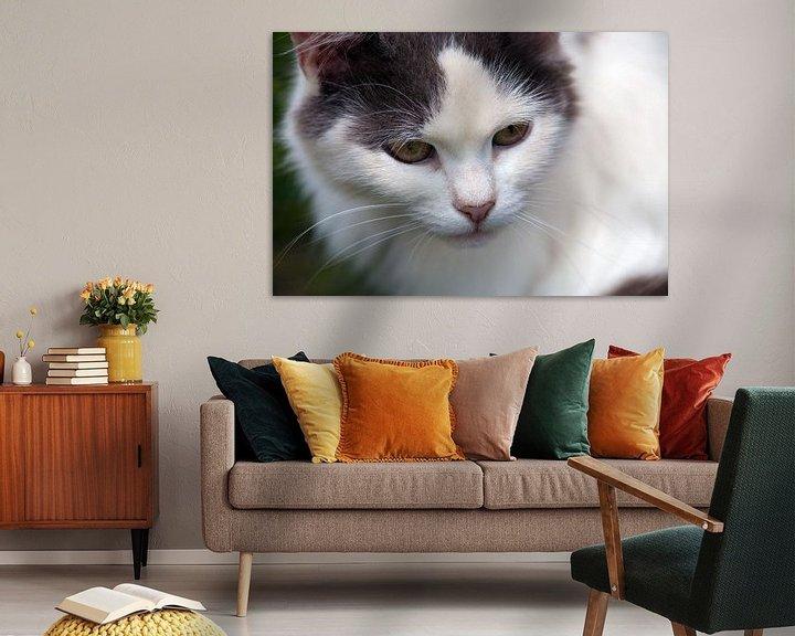 Beispiel: Katze von BVpix