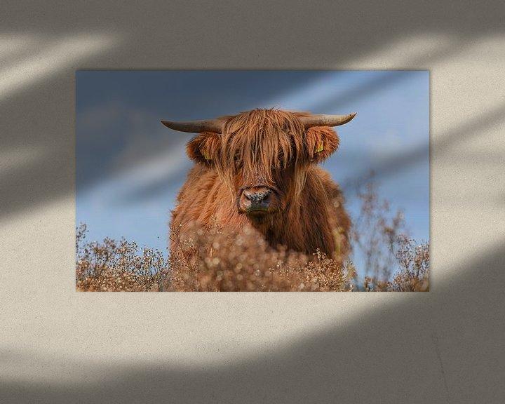Beispiel: Schottischer Hochlandbewohner von Kitty van Helmond